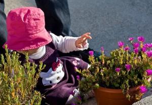 escolher flores