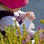 flor pequenina